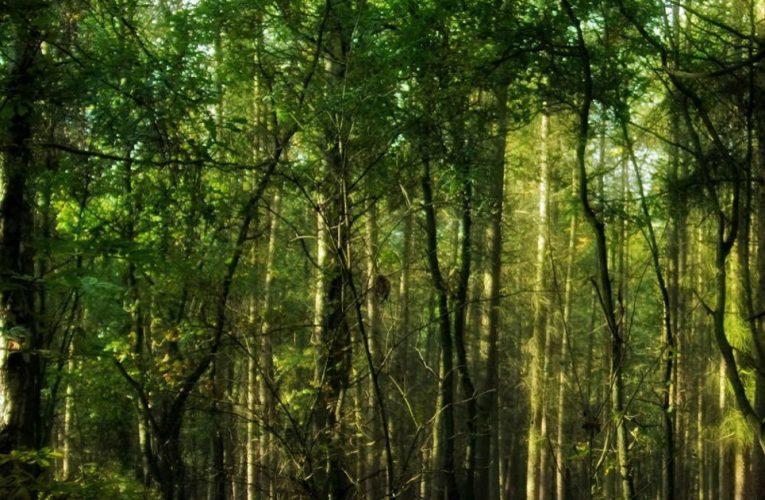 पत्थर माफियाओं का घने जंगलों में कब्ज़ा, अवैध काम को दिया जा रहा है अंजाम