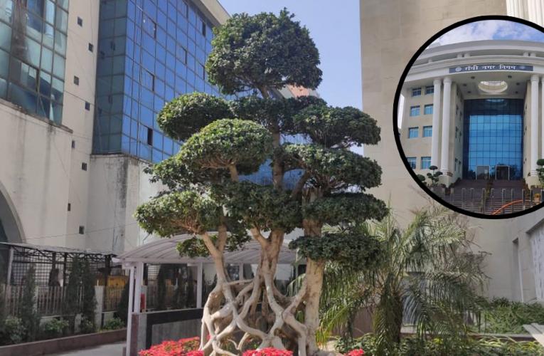 रांची नगर निगम की खूबसूरती बढ़ा रहे ये पेड़, ये है कीमत…