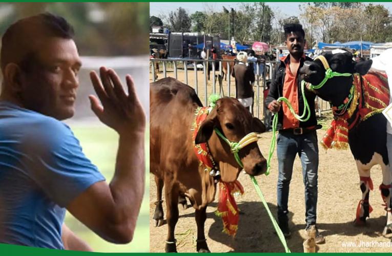 महेंद्र सिंह धोनी को मिला पूर्वी भारत के सर्वश्रेष्ठ गौ-पालक का सम्मान