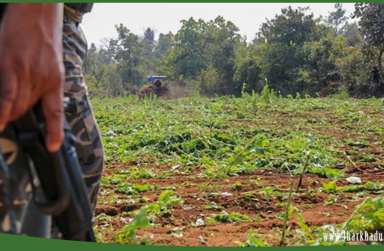 Over 1000 acres of poppy plantation destroyed in Ranchi,Khunti, and Chatra..