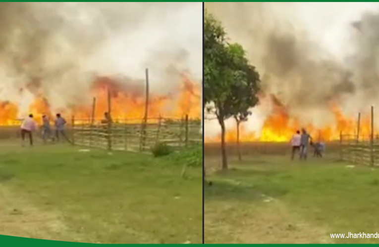साहेबगंज: 150 बीघा खेत में तैयार गेहूं की फसल पलक झपकते जलकर हुई राख..
