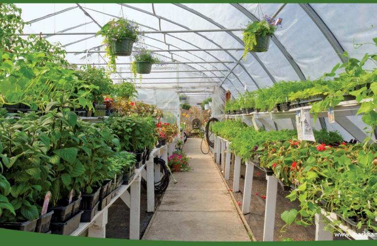 हॉर्टिकल्चर खेती को बढ़ावा दे रही सरकार, फलों की मिठास और फूलों की सुगन्ध बिखेर रहे हैं खेत..