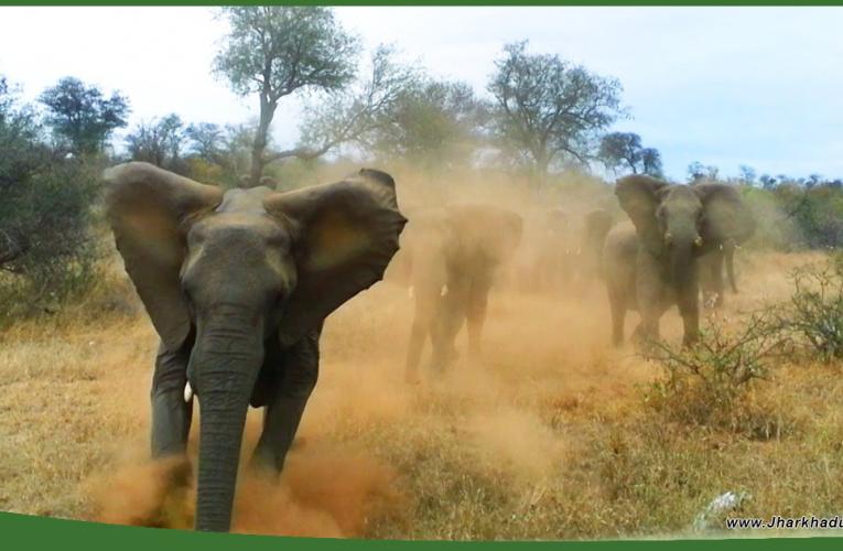 गिरिडीह में हाथियों का उत्पात, 24 घंटे में 4 लोगों का मार डाला..